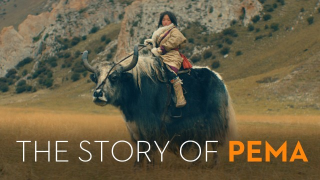 the_story_of_pema