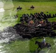 guardians_of_the_grasslands_1
